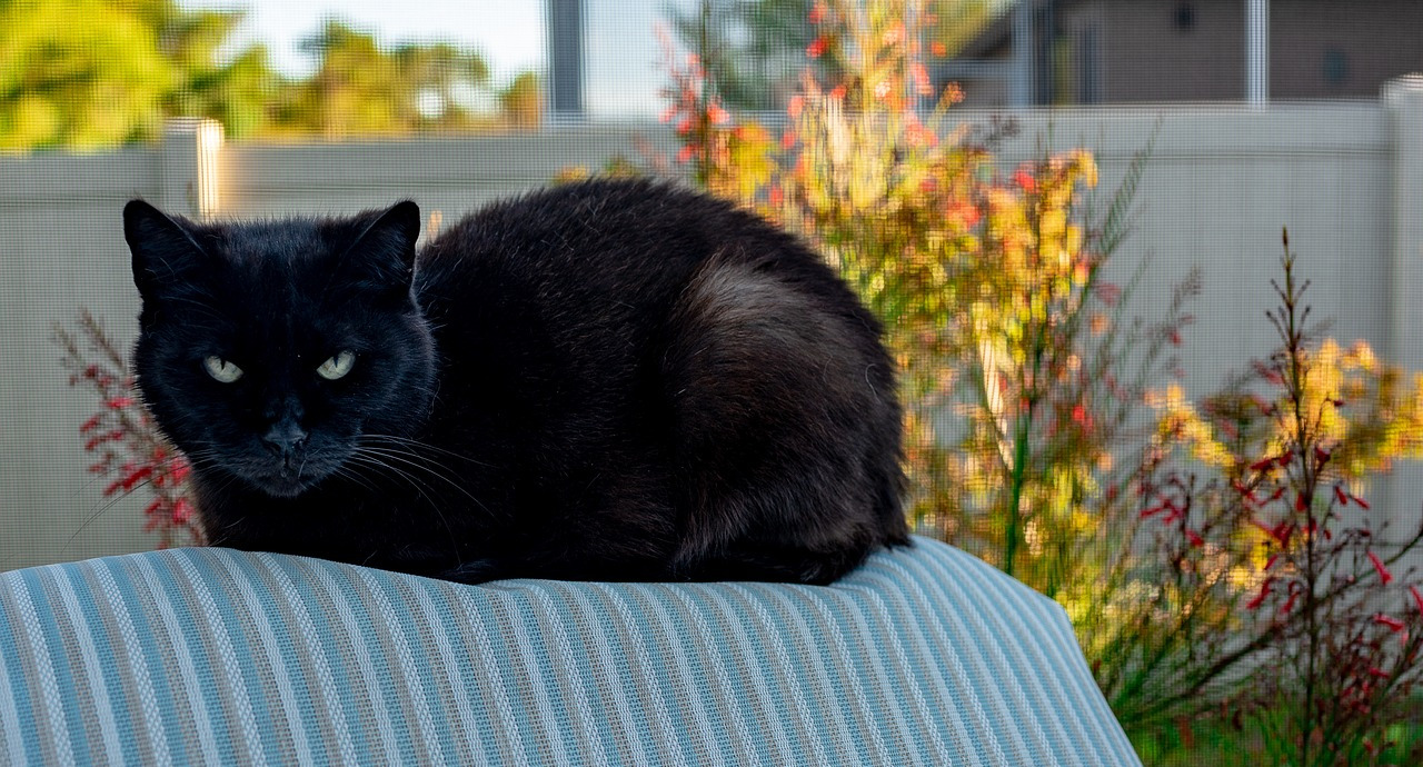 A black cat sitting on a chair outside, looking at the camera